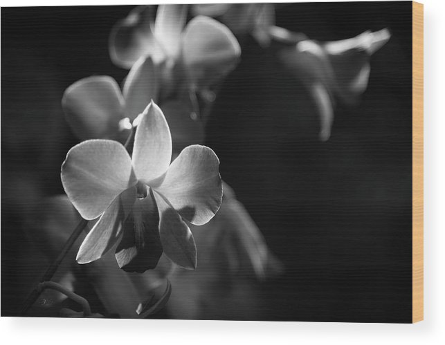 Black And White Wood Print featuring the photograph Orchids by Johanna Froese