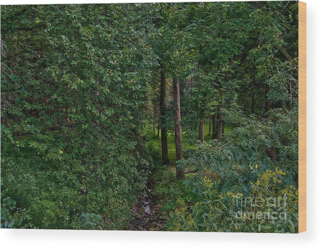 Brook Wood Print featuring the photograph Overgrown Brook by Jake Donaldson