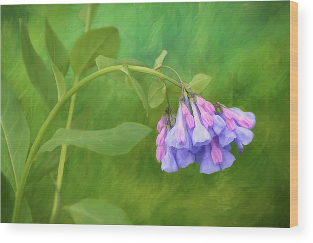 Isabela Cocoli Wood Print featuring the mixed media Painterly Virginia Bluebells by Isabela and Skender Cocoli