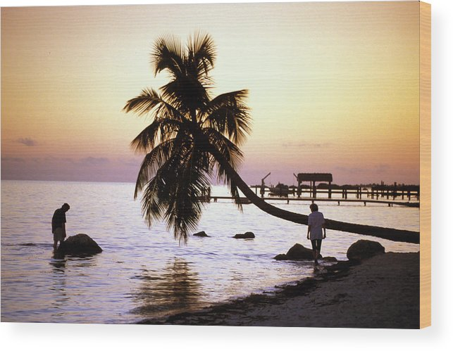 Sunset Wood Print featuring the photograph Palm At The Moorings by Carl Purcell