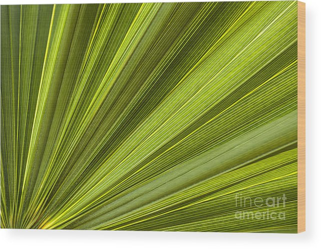 Leaf Wood Print featuring the photograph Palm Leaf Abstract by Elena Elisseeva