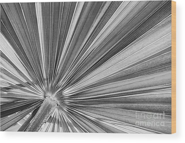 Leaf Wood Print featuring the photograph Palm Leaf In Black And White by Elena Elisseeva