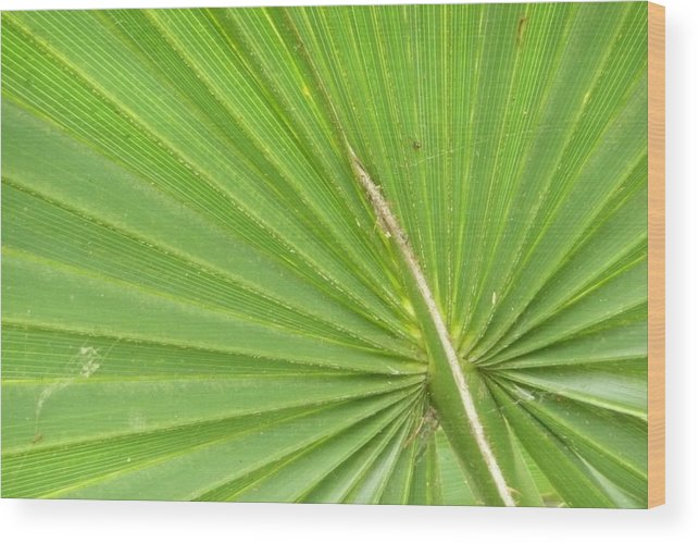 Palmetto Wood Print featuring the photograph Palmetto II by Kathy Schumann
