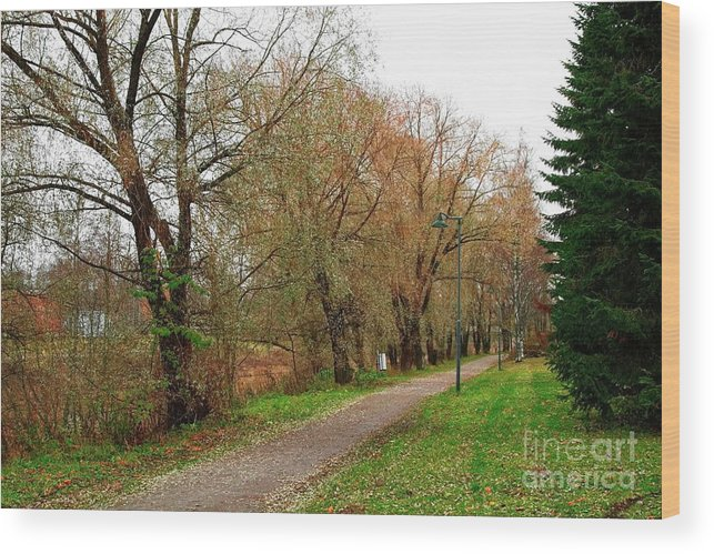 Path Wood Print featuring the photograph Parkway by Esko Lindell