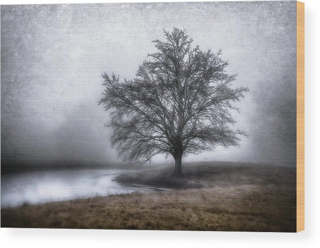 Tree Canvas Print Wood Print featuring the photograph Peaceful Country Setting by Garett Gabriel