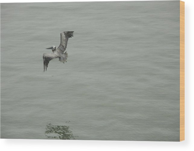 Bird Wood Print featuring the photograph Pelican by Dean Corbin