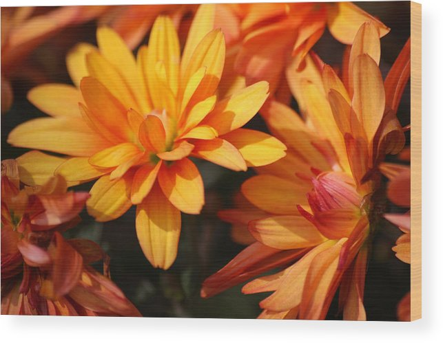 Flowers Wood Print featuring the photograph Petals Of Autumn 2 by Jim Darnall