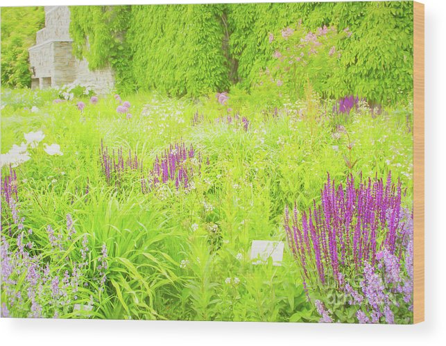 Tbg Wood Print featuring the photograph Piet Oudolf Garden At Tbg by Marilyn Cornwell