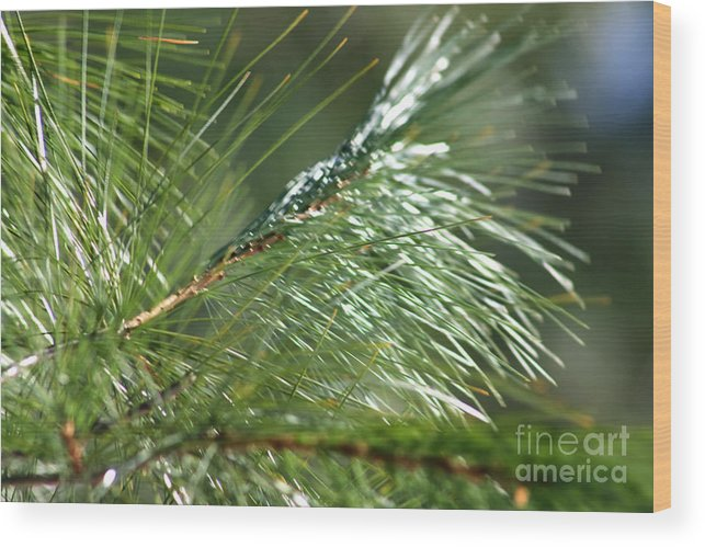 Nature Wood Print featuring the photograph Pine Needles Series 1 by Robin Lynne Schwind