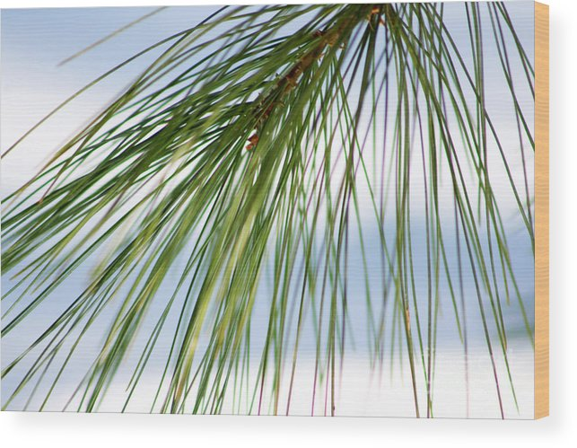Nature Wood Print featuring the photograph Pine Needles Series 3 by Robin Lynne Schwind