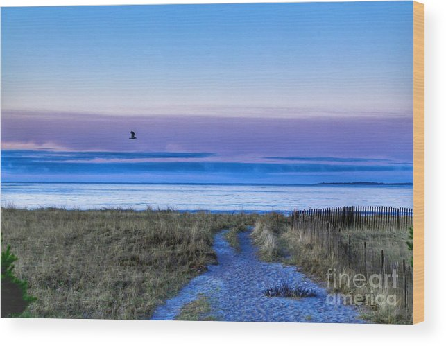 Spring Wood Print featuring the photograph Pine Point Morning by Colleen Mars
