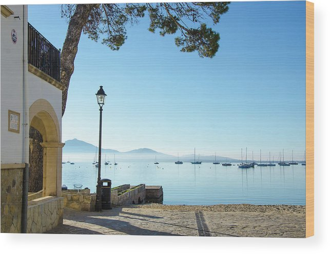 Morning Wood Print featuring the photograph Pine Walk Morning, Puerto Pollensa by Gerry Greer