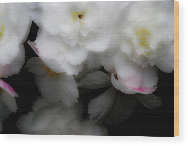 Flowers Wood Print featuring the photograph Pink And Yellow On White 4 by Lee Santa
