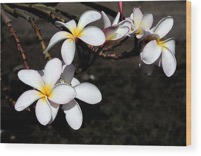 Watercolor Wood Print featuring the photograph Plumeria 1 by Doug Johnson
