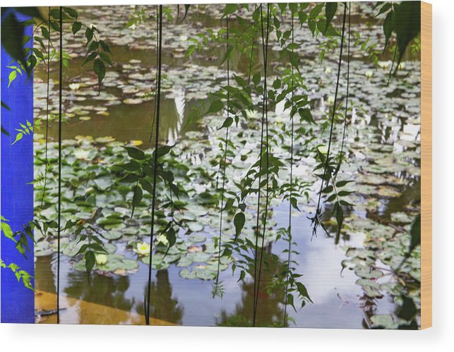 Pond Wood Print featuring the photograph Pond In Marrakesh by Henri-Louis ROLAND