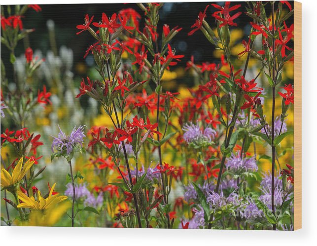 Fiona Craig Wood Print featuring the photograph Prairie Wildflowers 2 by Fiona Craig