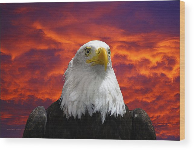 Eagle Wood Print featuring the photograph Pride And Fire by KatagramStudios Photography