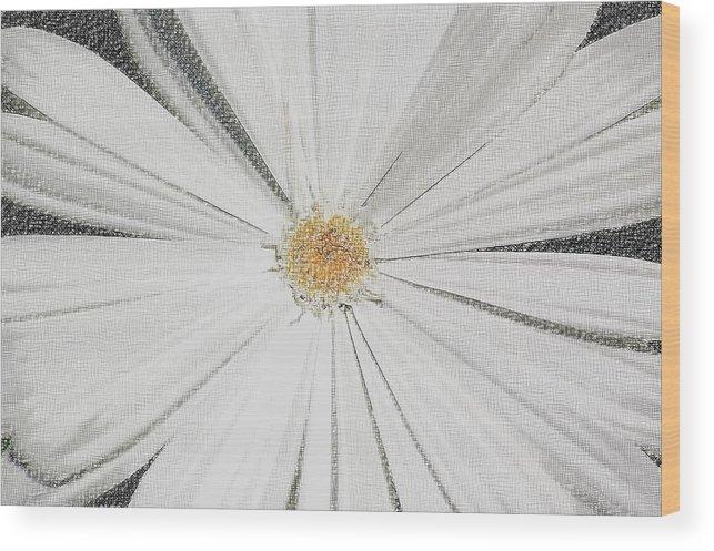 Daisy Wood Print featuring the photograph Puckered Daisy by Jennifer Englehardt