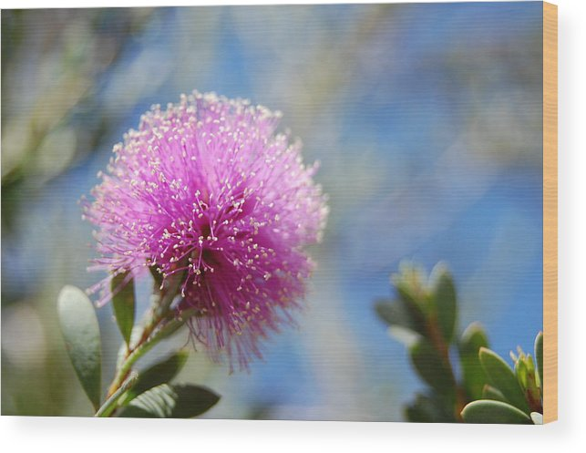 Floral Wood Print featuring the photograph Purple Puff by Jean Booth