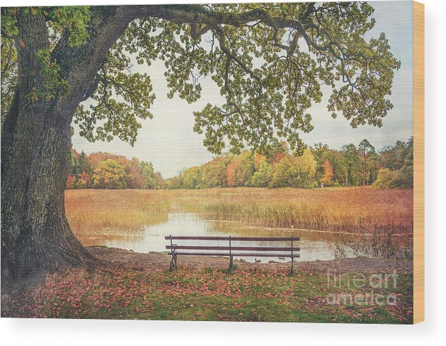Kremsdorf Wood Print featuring the photograph Quiet Time by Evelina Kremsdorf