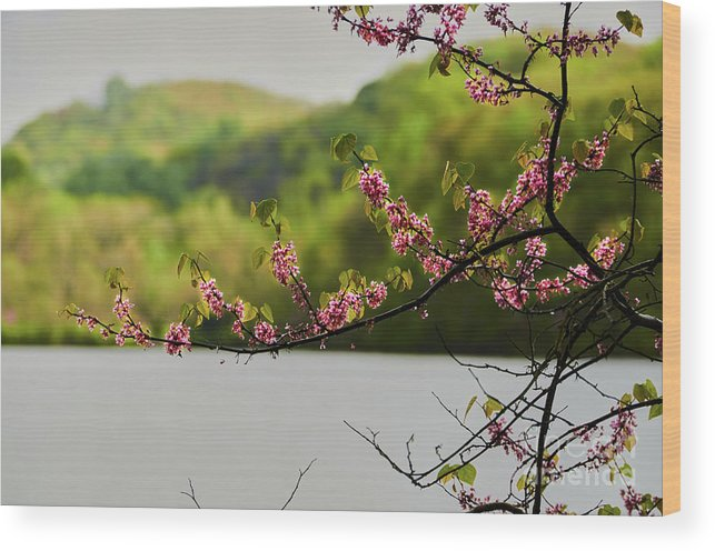 Radner_lake Wood Print featuring the photograph Radner Lake During The Spring by Stanton Tubb