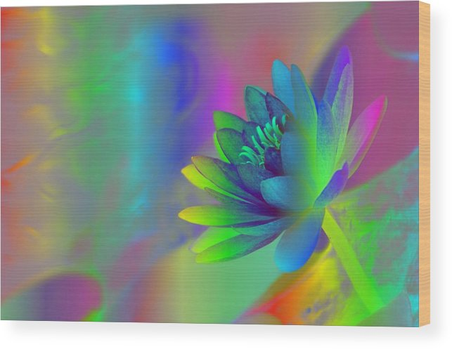 Rainbow Wood Print featuring the photograph Rainbow Lily by Donna Bentley