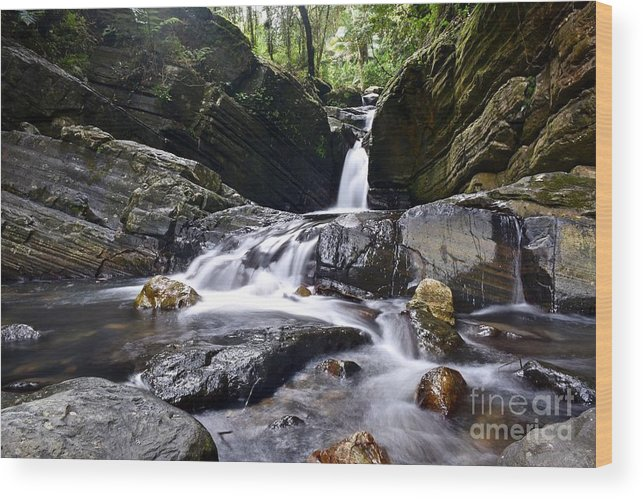 Destination Travel Wood Print featuring the photograph Rainforest Stream by Jeramey Lende