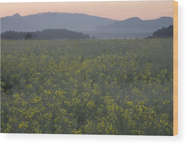 Brnik Wood Print featuring the photograph Rapeseed Dawn by Ian Middleton