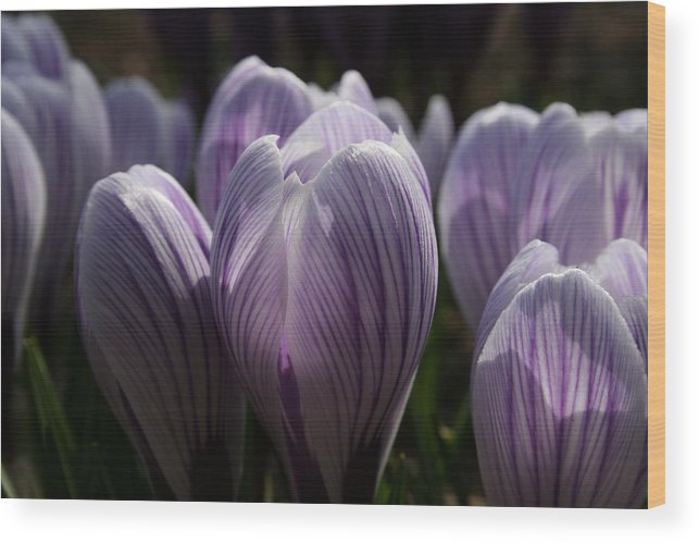 Flowers Wood Print featuring the photograph Reaching For The Light by Jeff Porter