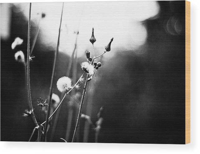 Black And White Photography Wood Print featuring the photograph Reaching For The Light by Kelly Hayner