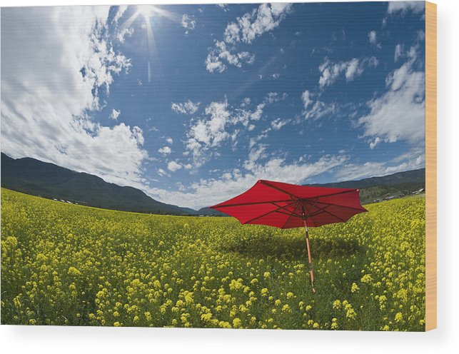 Red Wood Print featuring the photograph Red Alert by Peter Olsen