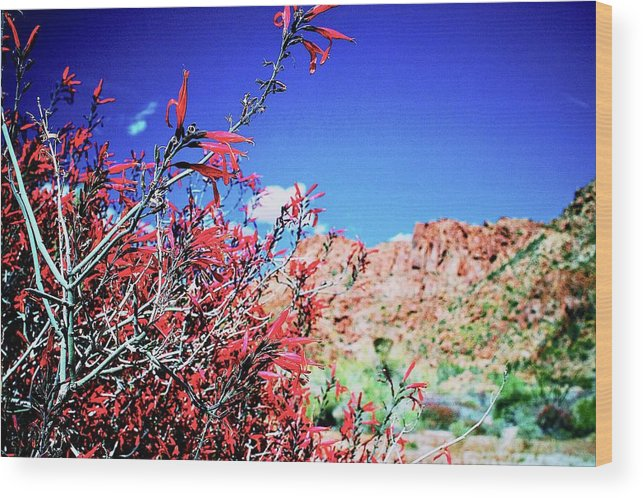 Ajasper Wood Print featuring the photograph Red Bloom by Anna Jasper