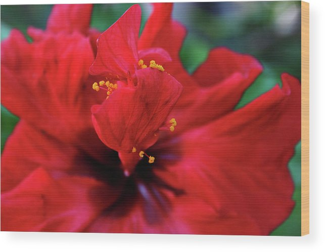 Flower Wood Print featuring the painting Red Flower by Yavor Kanchev
