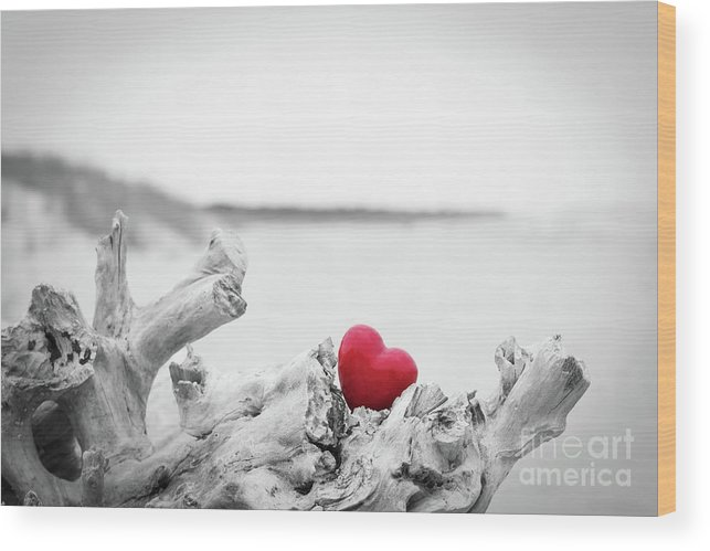 Red Heart In A Tree Trunk On The Beach Love Symbol Red Against