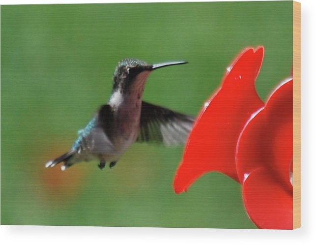 Hummingbird Wood Print featuring the photograph Red Is My Favorite Color by Lori Tambakis