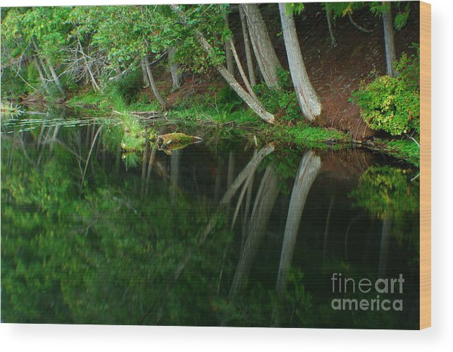 Forest Wood Print featuring the photograph Reflections Of A Forest by Idaho Scenic Images Linda Lantzy