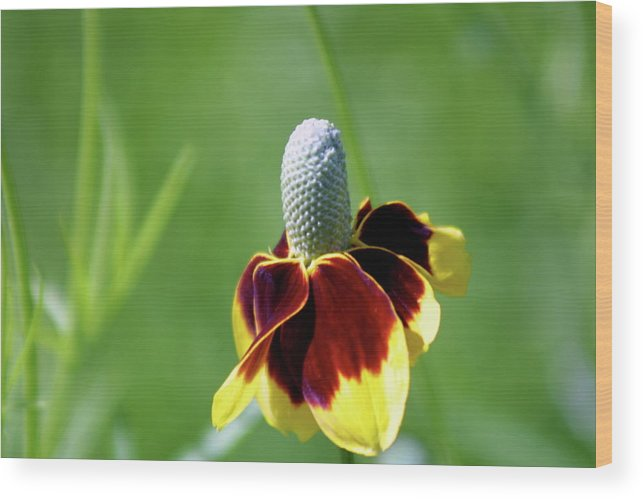 Wildflower Wood Print featuring the photograph Rejoicing by Mary J Hicks