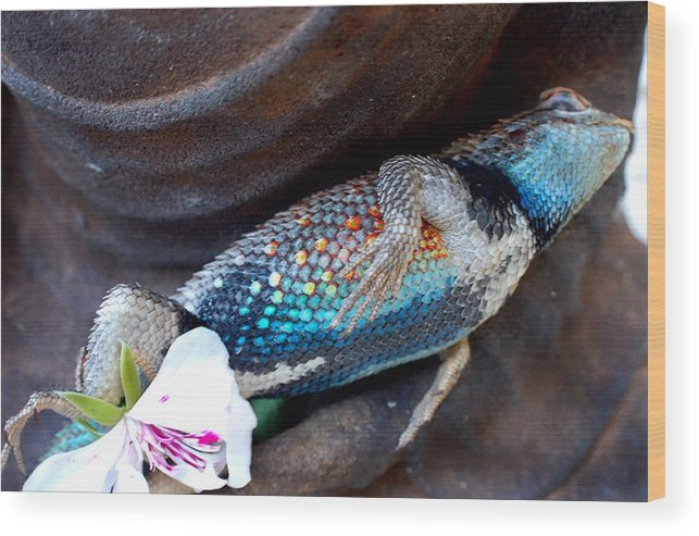 Stil Life Wood Print featuring the photograph Requiem For A Rainbow Lizard by Heather S Huston