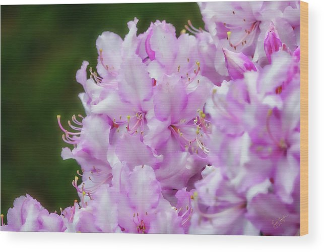 Rhododendron Wood Print featuring the photograph Rhodie Glow by Rick Lawler