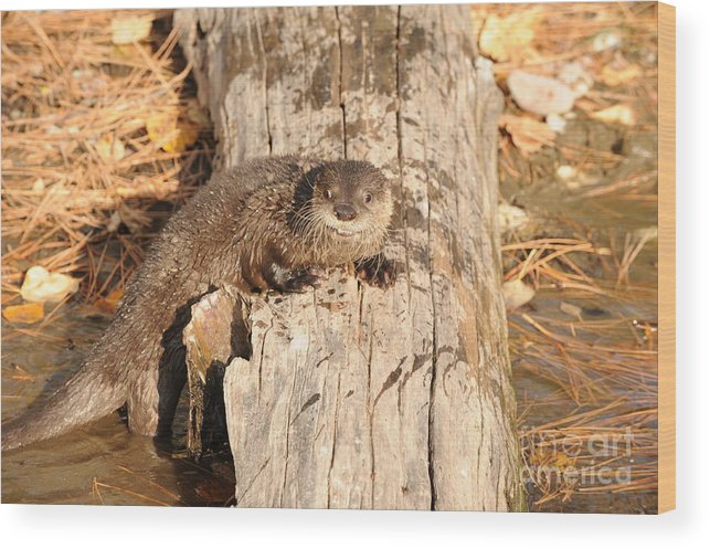 River Otter Wood Print featuring the photograph River Otter by Dennis Hammer