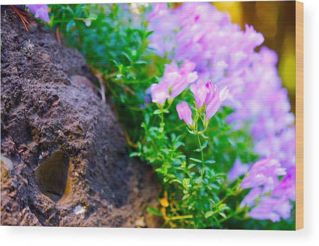 Floral Wood Print featuring the photograph Rock And Flowers by Paul Kloschinsky