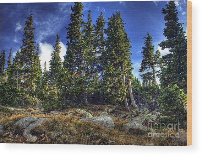 Nature Wood Print featuring the photograph Rock Garden by Pete Hellmann