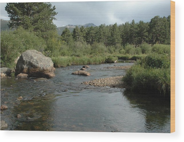 Nature Wood Print featuring the photograph Rocky Mountain Stream by Kathy Schumann