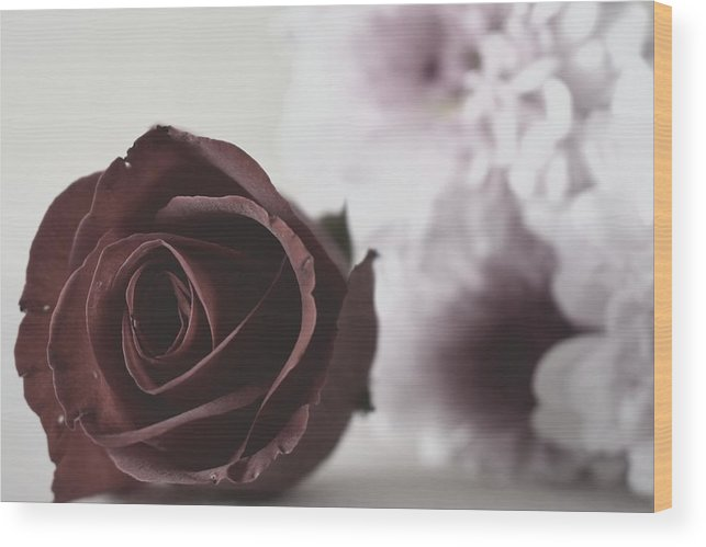 Rose Wood Print featuring the photograph Rose #005 by Ninie AG