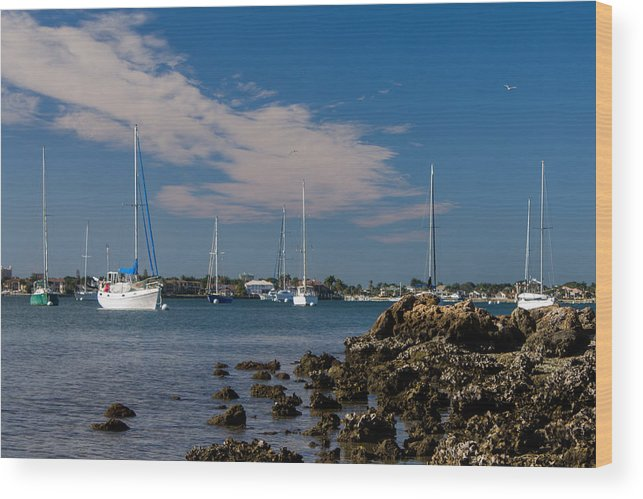 Marina Jacks Wood Print featuring the photograph Sailor's Dream by Michael Tesar