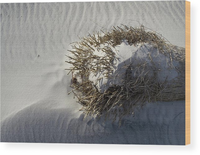 Sandy Ball Wood Print featuring the photograph Sandy Ball by Dylan Punke