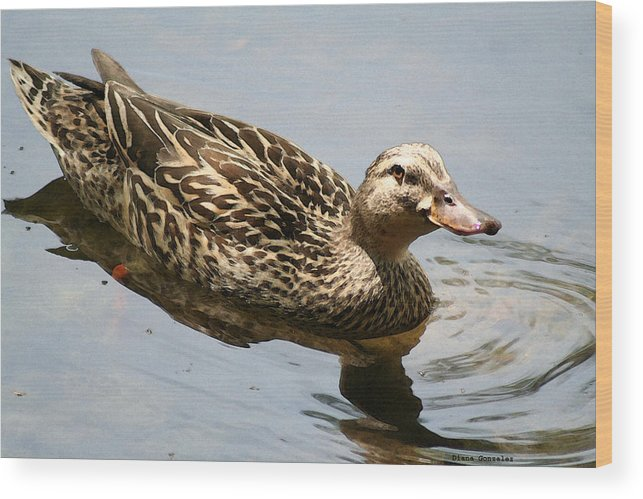 Duck Wood Print featuring the painting Saturday At The Pond by Diana Gonzalez