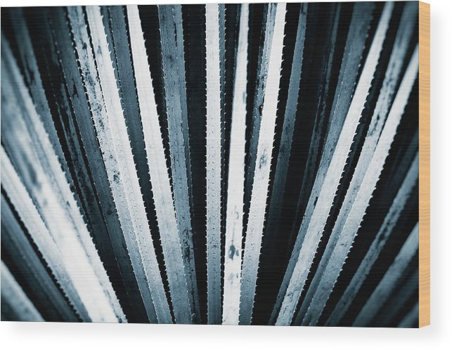 Plant Wood Print featuring the photograph Sawtooth by Scott Norris