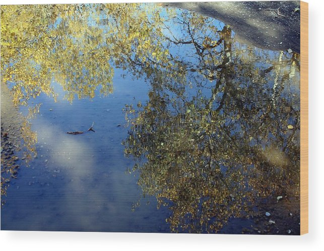 Reflections Wood Print featuring the photograph Scenes From A Mud Puddle by Tiffany Vest
