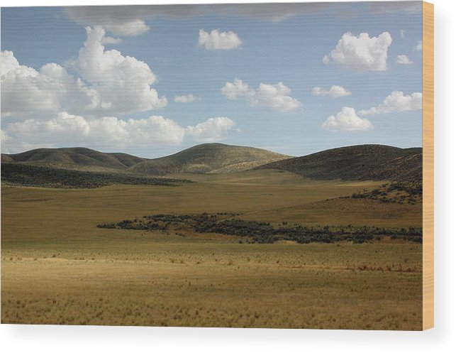 Screen Saver Wood Print featuring the photograph Screen Saver by D'Arcy Evans